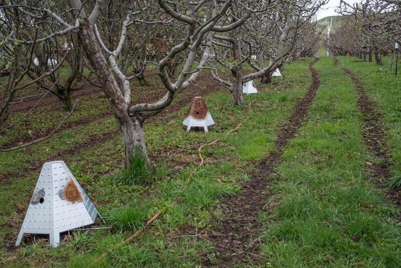 Protectie pomi inghet: Un exemplu de fumigena pentru livada