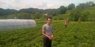 Cultivarea capsunilor