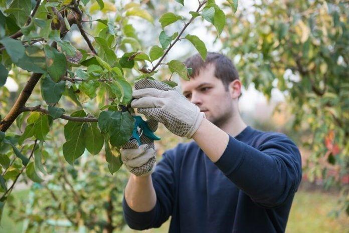Instalarea tinerilor fermieri sfaturi importante pentru accesarea fondurilor europene