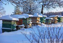 Albine iarna