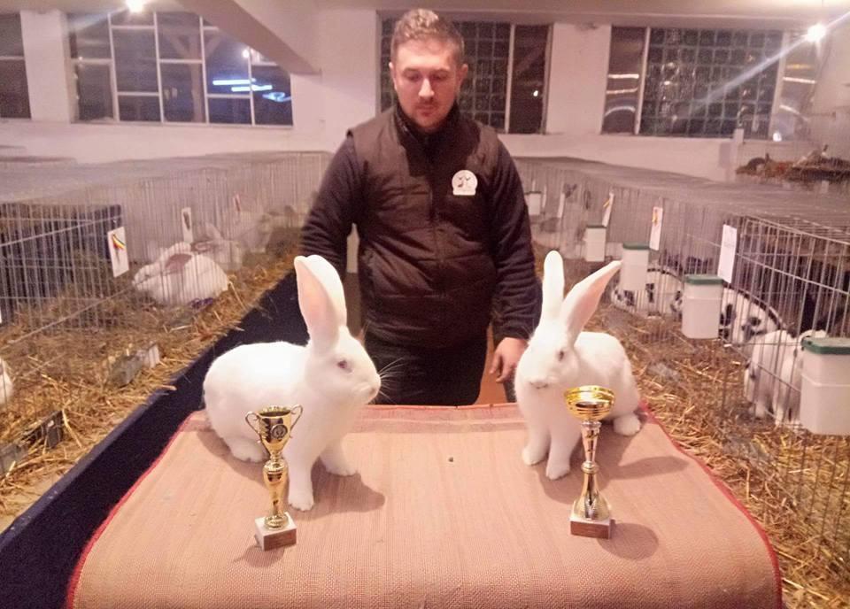 Afaceri cu iepuri