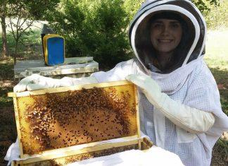Cresterea albinelor pentru incepatori - sfaturi utile pentru cei aflati la inceput de drum.