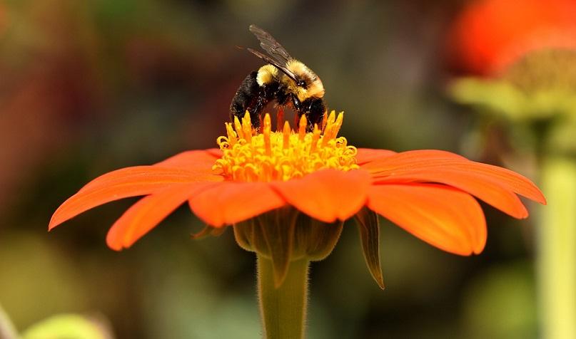 Manualul apicultorului - va oferim cele mai importante sfaturi in cresterea albinelor, pentru fiecare luna din an..