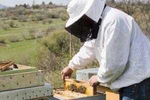 Cele mai importante sfaturi privind lucrarilor apicole, pentru fiecare luna in parte.