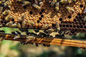 Manualul apicultorului