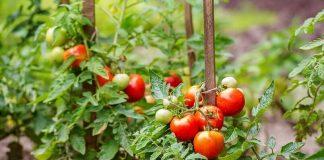 Tratamente bio pentru legume - solutii si strategii eficiente
