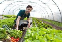 Masura 6.3 - ghidul solicitantului - cum sa accesezi fonduri europene pentru ferme mici