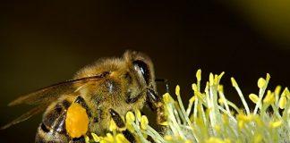 Viata albinelor - cate albine sunt intr-un stup
