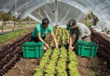 Dezvoltare ferme mici ghidul solicitantului