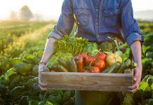 Proiect model ferma legume fonduri europene
