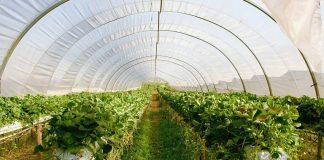 Dezinfectarea solului in solar
