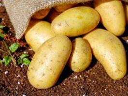 Cartofii de Lunguletu