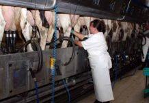 Ferma de vaci de lapte