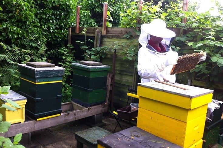 Fonduri europene apicultura
