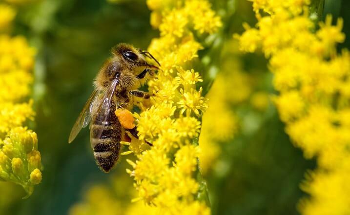 Recoltare polenului