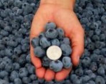 Cele mai bune soiuri de afine bluecrop