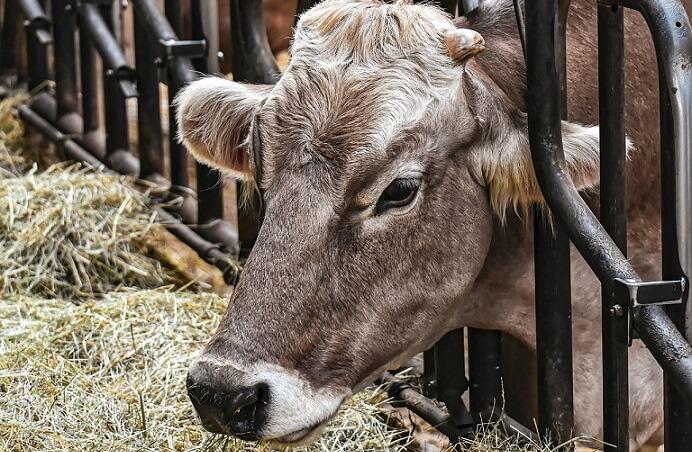 Tipuri adaposturi vaci