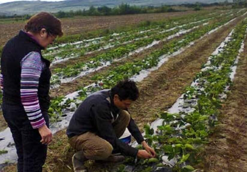 Fonduri europene pentru ferme mici
