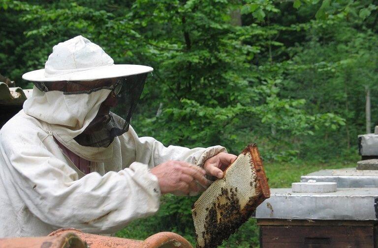 afacere cu albine - cat te costa sa incepi o afacere apicola