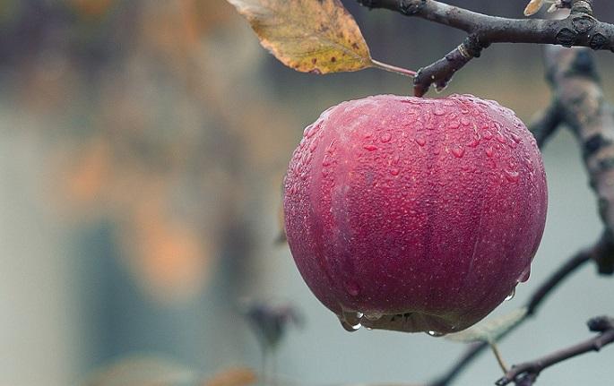 Schema tratament semintoase pomi fructiferi