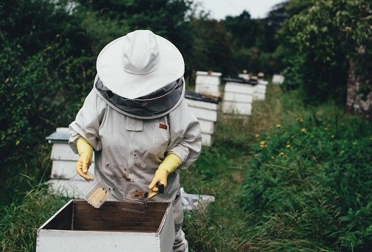 Ceaiuri pentru albine