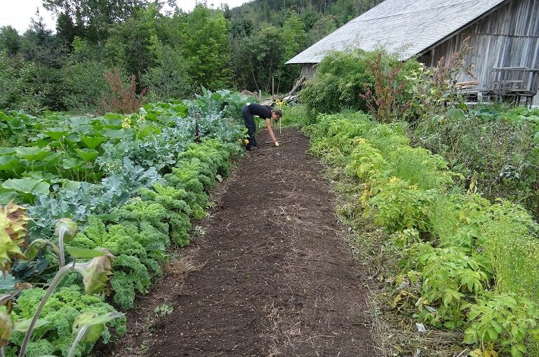 Gradina legume calendar semanare