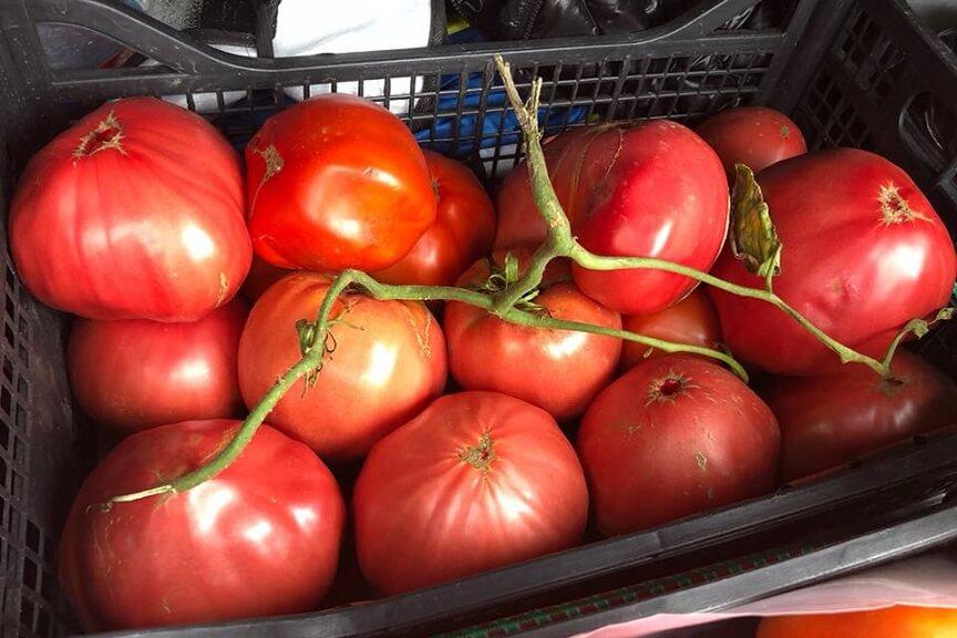 Obtinerea semintelor rosii