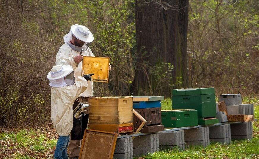 Roitul albinelor - ce trebuie sa stim