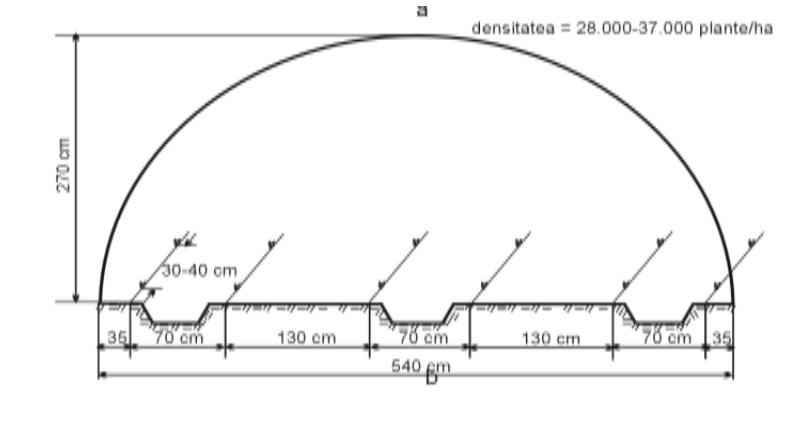 Schema plantare rosii solar tip tunel