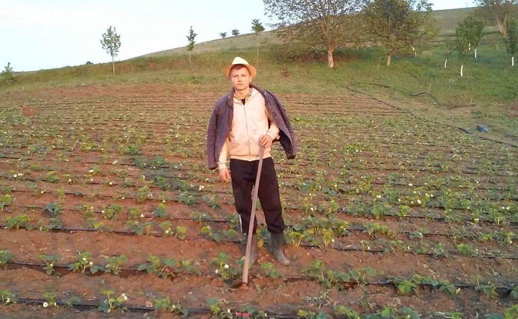 Plantatie capsuni