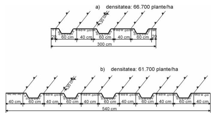 Scheme de înfiinţare a culturii de ardei în solarii bloc (a) şi tunel (b)