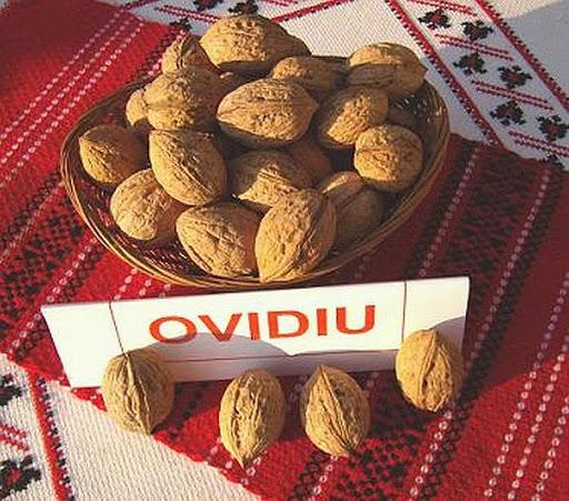 Soiuri de nuc - Ovidiu