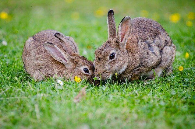 Mancarea pentru iepuri