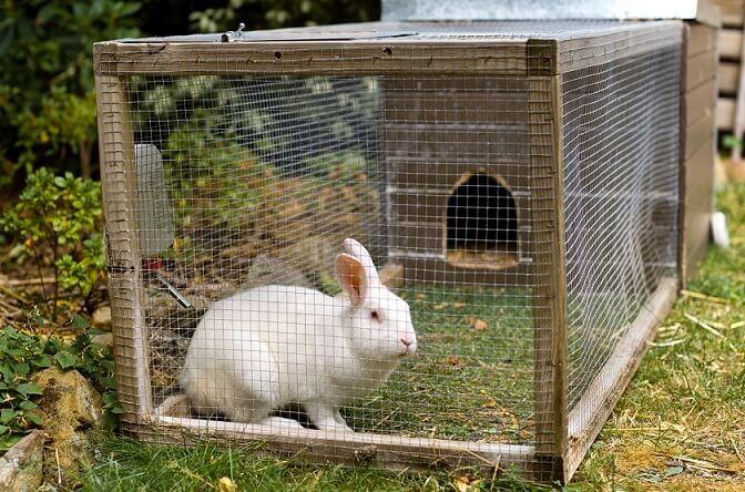 Hrana, furaje pentru iepuri