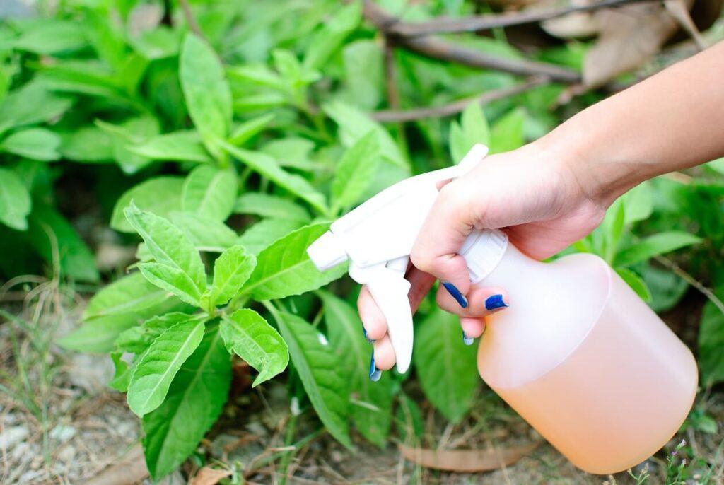 Insecticide naturale pentru legume si flori