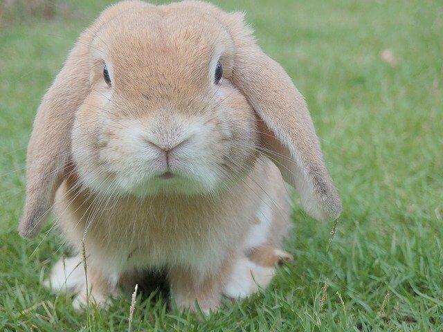 Totul despre hrana iepurilor si ce mananca acestia