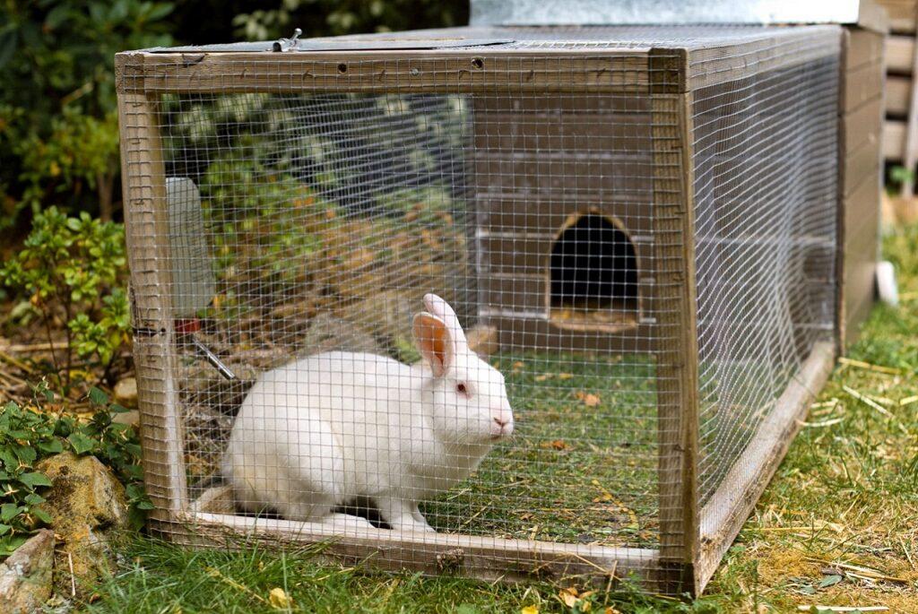 valorificarea iepurilor - iepure in cusca