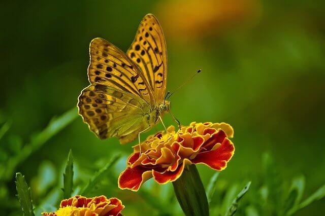 fluture colorat